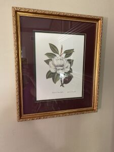 Pair of Framed Magnolia Prints