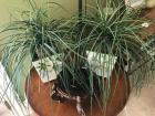 2 decorative ferns and wooden stand